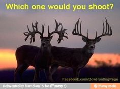 Which one would you shoot?