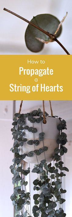 How to Propagate a String of Hearts
