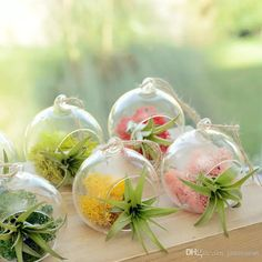jasminesn provides classical china vases for sale online, crystal transparent vases for weddings and elegant pure white vases glass, put some flowers in 8 cm creative hanging glass vase succulent air plant display terrarium,small hanging glass vase air plant terrarium and make your room more graceful.