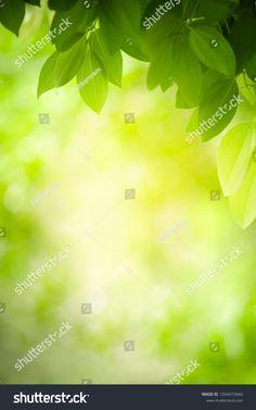 Closeup Nature View Green Leaf On ภาพสต็อก (แก้ไขตอนนี้) 1504073666 Nature Green, Green Leaf Background, Nature View, Green Leaves, Close Up, Stock Photos