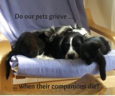 Do our pets grieve too (when an animal companion dies)? Pet Loss, Grief, Wellness, Posts, Animals, Animais, Messages, Animales, Animaux