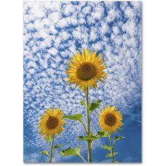 Trademark Fine Art 'Sunflower Triad' Canvas Art by Michael Blanchette Photography, Assorted