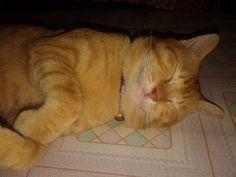 i am Garfield