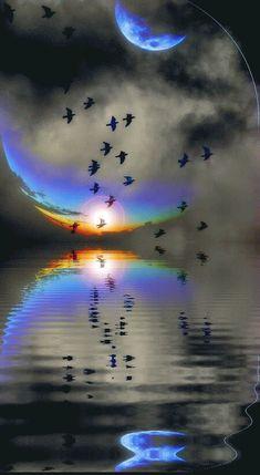 reflection sea moon flock of birds