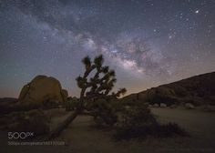 Lean On Me  A Joshua tree leans towards the light of the galaxy on a quiet spring night in Joshua Tree National Park.  Capturing the light in the darkness Matt  Camera: Canon EOS 6D Shutter Speed: 30sec ISO/Film: 6400  Image credit: http://ift.tt/2a1n6o0 Visit http://ift.tt/1qPHad3 and read how to see the #MilkyWay  #Galaxy #Stars #Nightscape #Astrophotography