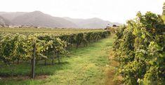 Tipps und Empfehlungen von Wachau Inside. Austria, Vineyard, Outdoor, Pictures, Vacation, Hiking, Tips, Outdoors, Vine Yard