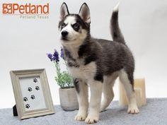 Petland Texas (petlandtexas) on Pinterest
