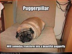 puggerpillar hahaha