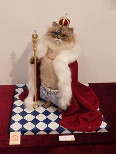 Created by Miru Cute Animal Memes, Cute Funny Animals, Cute Cats, Felt Dogs, Felt Cat, Needle Felted Animals, Felt Animals, I Love Cats, Crazy Cats