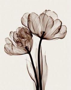 Parrot Tulips II (Sm.) Art Print at Posters2Prints.com