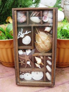Wooden shadow box with seashells horseshoe crab by BopasCloset, $49.00