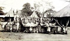 Hunt Trophies, East Africa 1928 Hunt Photos, Old Photos, Out Of Africa, East Africa, Vintage Safari, Hunting Pictures, Big Game Hunting, Trophy Rooms, Happy Valley