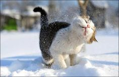 Do the snow shake! ` . pic.twitter.com/0LMvJeQfcT