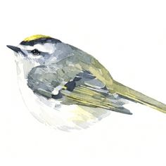 golden-crowned kinglet painting