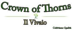 I Nostri Prodotti - Benvenuti su Euphorbia milii - Crown of Thorns