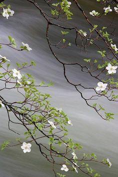Sen bana baktığın zaman, İçimin bilinmeyen bir yerinde şiir çiçeği açar... Atakan Gülnar