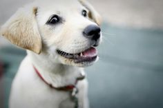 Where to Buy a Dog From