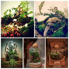 Terrarium Raicelai https://m.facebook.com/Raicelai-Terrariums-and-green-deco-1420289481601293/