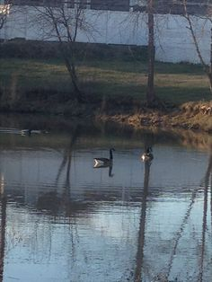 Ducks in pond on a Winter Evening!