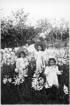 Three Little Girls Amongst Lilies - Photograph of Everyday life in Ontario, Canada, 1900-1914, by Marsden A. Kemp (1867-1943).