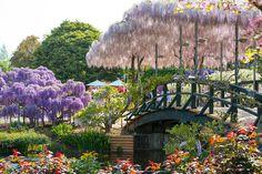 Парк глициний и азалий Ashikaga! Обязательно побывать в апреле