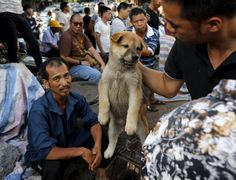 Petition for Mr. Chen Wu, Yulin Governor URGENT: Stop The Yulin Dog & Cat Festival, Save Thousands Of Animals Now!