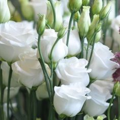 Lisianthus | Seasonal Flowers for March on the Amanda Austin Flowers Blog #flowers #florist #seasonal #lisianthus