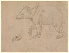 A Bear Walking. Leonardo da Vinci