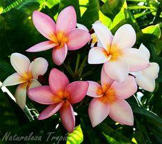 Plantas ornamentales con agradables fragancias ideales para el jardín