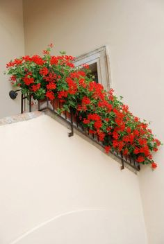 Geranios Rojos....love this flowers and when they are in boxes