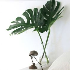 9 planter der egner sig til badeværelset - især i fugt og mørke Planters Wart, Tire Planters, Head Planters, Wooden Planters, Indoor Planters, Flower Planters, Ceramic Planters, Wheelbarrow Planter, Chair Planter