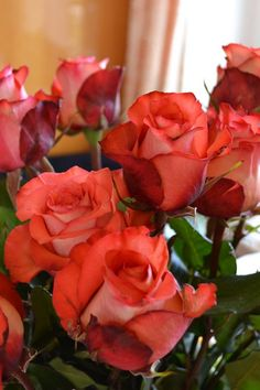 800x1200 Обои розы, цветы, букет, бутоны