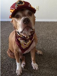 Michael Carter, Washington Redskins, Winchester, Dogs, Animals, Animales, Animaux, Doggies, Animal
