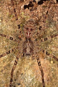 https://flic.kr/p/5VpW29 | Spider | Spider. Having merged with an environment it is easier to hunt and more difficultly to become extraction. A mimicry.