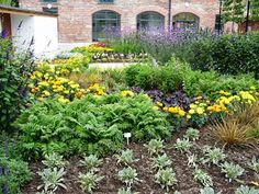 Kelli's Northern Ireland Garden: Community Garden Update
