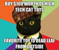 caturday lame memes to go Crazy Cat Lady, Crazy Cats, Business Cat Meme, Cute Cats, Funny Cats, Animal Memes, Cat Toys, Cat Memes, Fur Babies