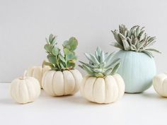 Give mini pumpkins a little more life by turning them into an indoor succulent garden. Try this tutorial for DIY mini pumpkin planters this fall season and...