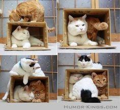 Cats + box = you already know