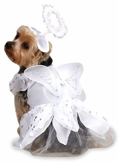 The Angel Paws Costume is a heavenly costume for your pooch sent from above. The suit features silver metallic accents with wings that shimmer. Complete the angelic attire with the halo headpiece, perfect for pictures that will melt people's hearts. #dogs