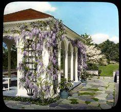 Davis Garden, slide. via Smithsonian.  Wisteria is very very 1930s.