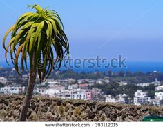 Palm tree and view from Castello Aragonese at Ischia Island, Italy - stock photo
