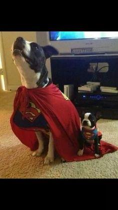 Super Dog with Super Puppy