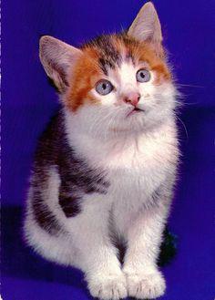 cute kitty vintage post card