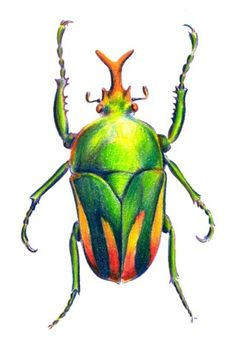 How to Draw a Colorful Beetle with Color Pencils - step by step with pics.
