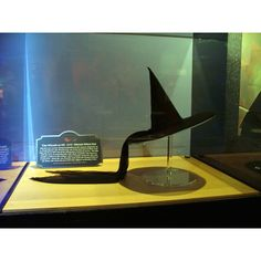 This the actual hat worn by Margaret Hamilton in the Wizard of Oz movie!!!! OMG WHERE IS THIS?!