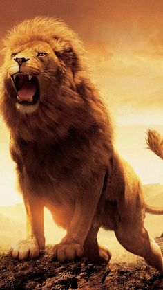 storage ideas narnia the lion the witch and the wardrobe aslan now visit Lion King Art, Lion Of Judah, Lion Art, Lion Live Wallpaper, Animal Wallpaper, Lion Images, Lion Pictures, Beautiful Lion, Animals Beautiful