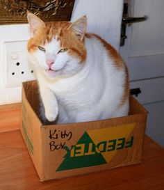 Cat in a Box (174 pictures)