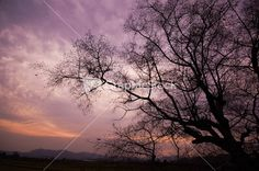 Silhouette of a willow tree with the sun behind the tree Stock Image