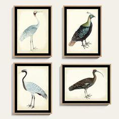 Bunny Williams Bird Oak Framed Print Art Framed Art, Framed Prints, Wall Art, Pastel Sunset, Mirror Art, Mirrors, John James Audubon, Cute Room Decor, Art Series