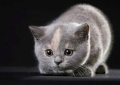 Sweet kitty. It's sooooo cute